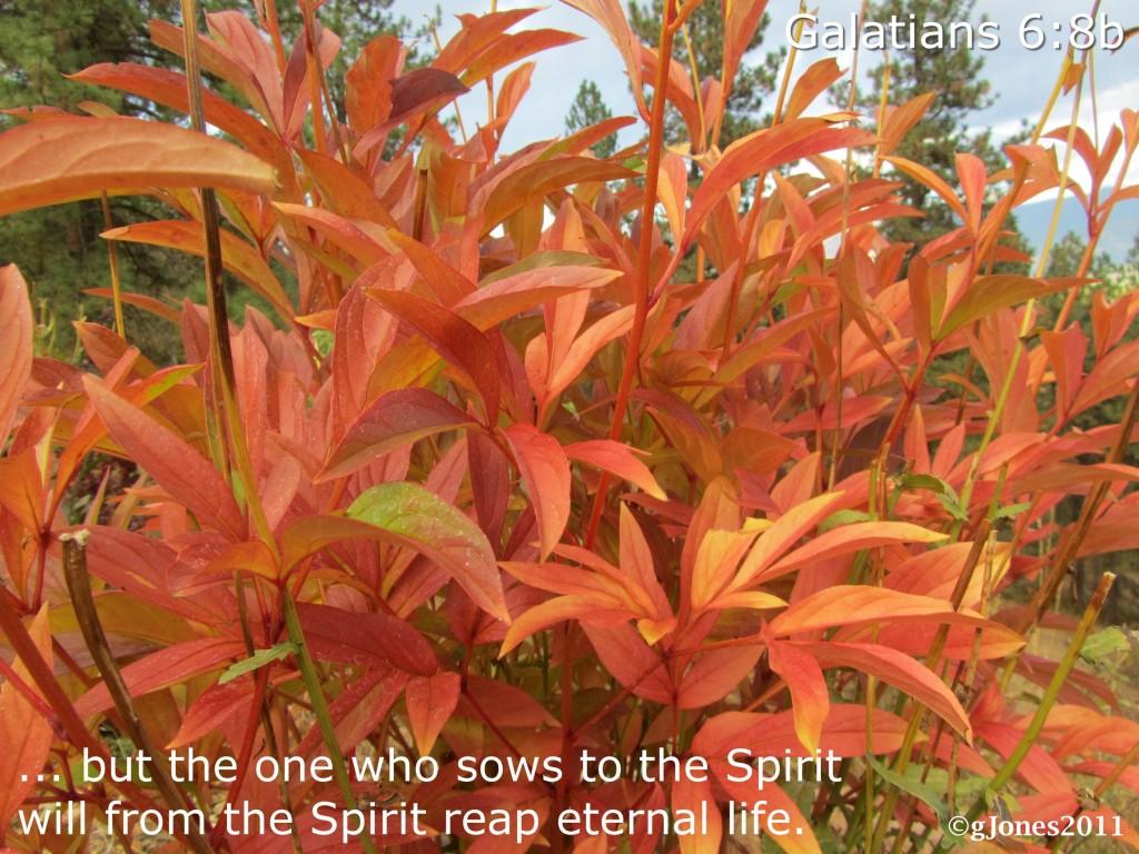 Fall Into Eternity - Galatians 6:8