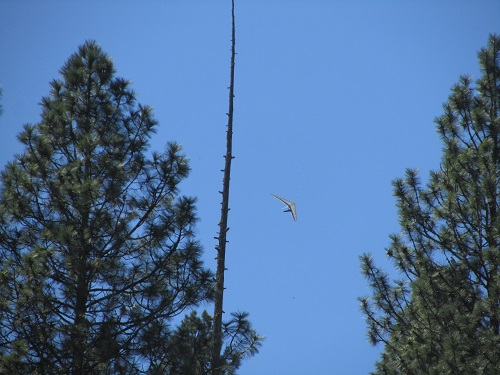 Hang Glider circling above the spike