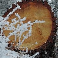 FrostyCut